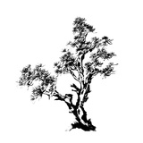 Chinese Traditional Ink Painting, Pine Tree On White Background Posters par  elwynn