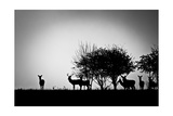 An Image Of Some Deer In The Morning Mist Posters by  magann