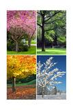 Four Seasons Collage: Spring, Summer, Autumn, Winter Print by  Hannamariah