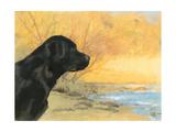 Oil Painting Portrait Of Black Labrador In Autumn Art by  Yarvet