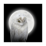 Isolated White Owl In Night With Moon Prints by  Angela_Waye