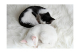 Two Sleeping Little Kitten On White Carpet Prints by  Yastremska