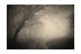 Deer In The Fog In A Dark Mysterious Forest Prints by  ando6