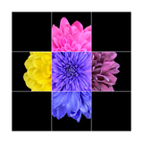 Colorful Chrysanthemum Flower Mosaic Design Art by  tr3gi