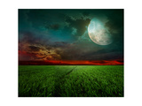 Young Wheat Field At Night With The Moonlight Poster by Krivosheev Vitaly