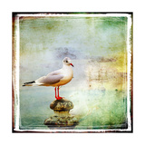 Sea Gull-Artistic Retro Styled Picture Posters by  Maugli-l