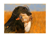 Oil Painting Portrait Of Black Labrador With Duck Posters by  Yarvet