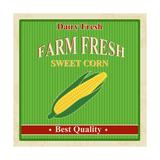 Vintage Farm Fresh Sweet Corn Poster Prints by  radubalint