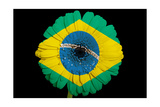 Gerbera Daisy Flower In Colors National Flag Of Brazil On Black Background Prints by  vepar5