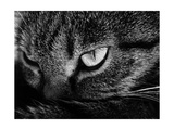 The Face Of A Cat In Black And White Prints by  anderm