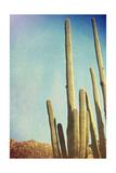 Desert Cactus With An Artistic Texture Overlay Plakater av  pdb1