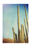 pdb1 - Desert Cactus With An Artistic Texture Overlay - Poster