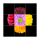 Colorful Daisy Flower Mosaic Design Prints by  tr3gi