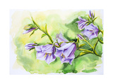 Watercolor Painting Of The Bell Flowers Prints by  Valenty