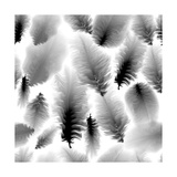 Seamless Pattern Of Black And White Feathers Print by  DarkInk
