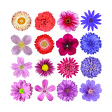 Big Selection Of Colorful Flowers Isolated On White Background Posters av  tr3gi