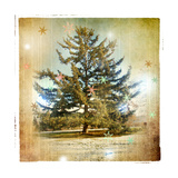 Vintage Winter Background With Pine Tree Prints by  Maugli-l