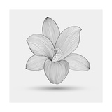 Abstract Floral Flower Lily Posters by Helga Pataki
