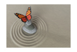 Zen Garden Meditation Stone With Butterfly Posters by  doomu