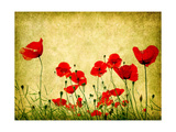 Photo Of A Poppies Pasted On A Grunge Background Art by  Volokhatiuk