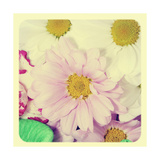 Closeup Of A Flower Bouquet With Daisies And Carnations, With A Retro Effect Premium Giclee Print by  nito