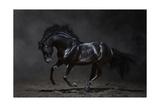 Galloping Black Horse On Dark Background Posters by Abramova Kseniya