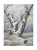 Lonely Oak In Winter Wood Art by  balaikin2009