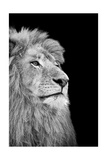 Black And White Isolated Lion Face Prints by  Snap2Art