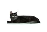 Black Cat Isolated On White Art by  Yastremska