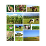Collage Of Rural Landscapes Poster by  miff32