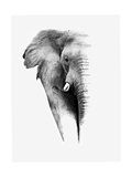 Donvanstaden - Artistic Black And White Elephant - Poster