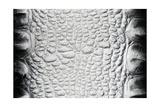Black-White Crocodile Skin Texture Kunstdrucke von Valitov Rashid