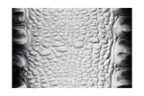 Black-White Crocodile Skin Texture Art by Valitov Rashid