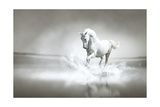 White Horse Running Through Water Posters by  varijanta