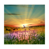 Sunset Is In The Field Premium Giclee Print by  nadiya_sergey