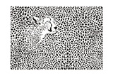Pattern Cheetahs Background Print by  Gepard