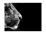 Isolated Leopard Face Card Prints by  Snap2Art