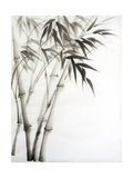 Watercolor Painting Of Bamboo Affiches par  Surovtseva