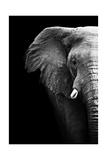Artistic Black And White Elephant Reprodukcje autor Donvanstaden