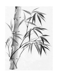Watercolor Painting Of Bamboo Poster by  Surovtseva