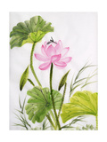Watercolor Painting Of Lotus Flower Poster by  Surovtseva