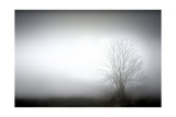 A Landscaped With A Fog And A Tree Print by  olly2