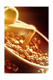 Coffe Beans In The Grinder Posters by  mythja