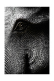 Elephant Head In Black And White Posters by  letoakin
