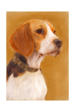 Oil Painting Portrait Of Beagle Poster by  Yarvet