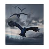 Crows Flying Poster par  AlienCat