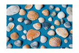 Seashells On Blue Bamboo Mat Poster by Nina Maria