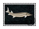 Postage Stamp. Sturgeon And Caviar Posters by  GUARDING-OWO
