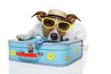 Tourist Dog With Hat And A Bag Fotografisk tryk af Javier Brosch