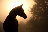 Silhouette Of A Beautiful Arabian Horse Against Sun Shining Through Heavy Fog, In Sepia Tone Posters by Sari ONeal